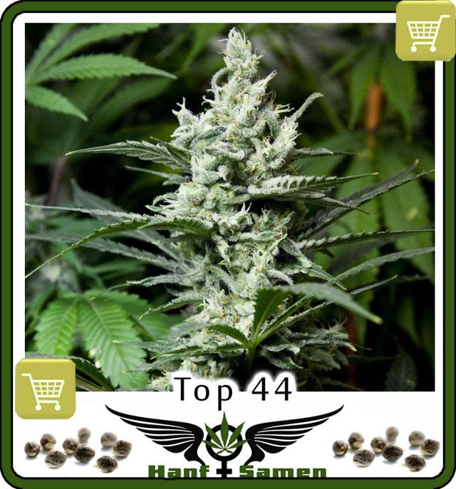 top44-saatgut-kaufen