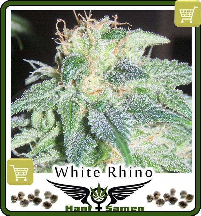 white-rhino-saatgut-kaufen