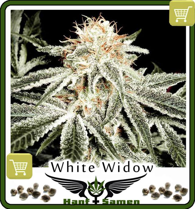 white-widow-saatgut-kaufen